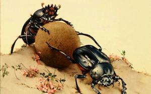Edward Detmold Beetles