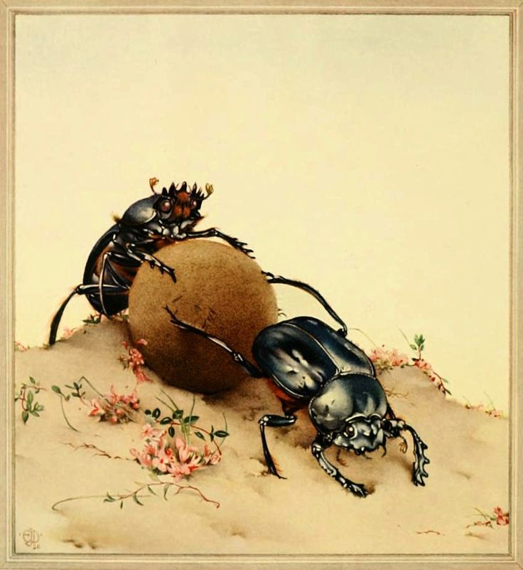 Dung Beetles Detmold